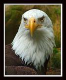Eagle 366