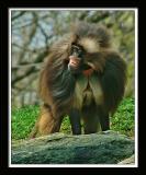 Monkey 102