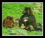 Monkey 110
