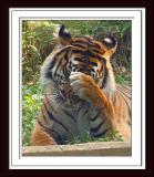 DC Zoo, Baltimore & Virginia