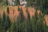 RMNP fall foliage