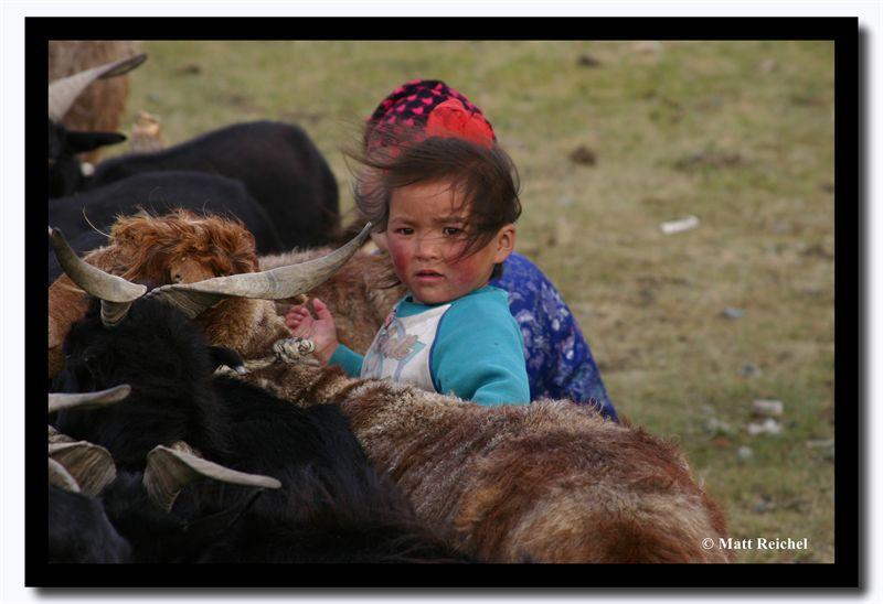 Collecting Sheep Milk, Bayan-Olgii Aimag