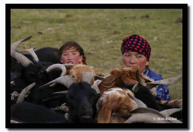 Milking Sheep, Bayan-Olgii Aimag