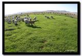 Sheep and Goats, Tov Aimag