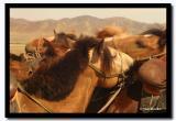 Mongolian Horses, Tov Aimag