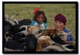Milking Sheep in the Afternoon, Bayan-Olgii Aimag