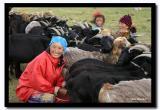 Milking the Goats, Bayan-Olgii