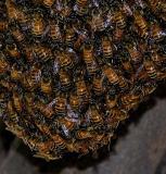 swarm close-crop