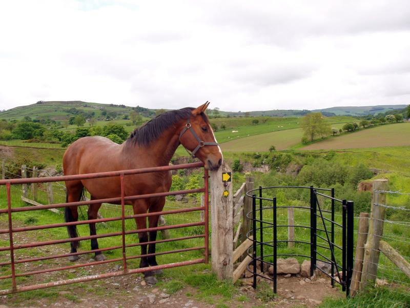 Horse at a kissing gate
