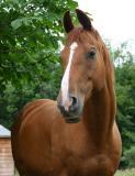 happy horse.