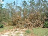 Katrina 211.jpg