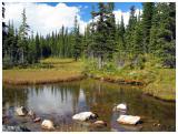 Sub Alpine Pond