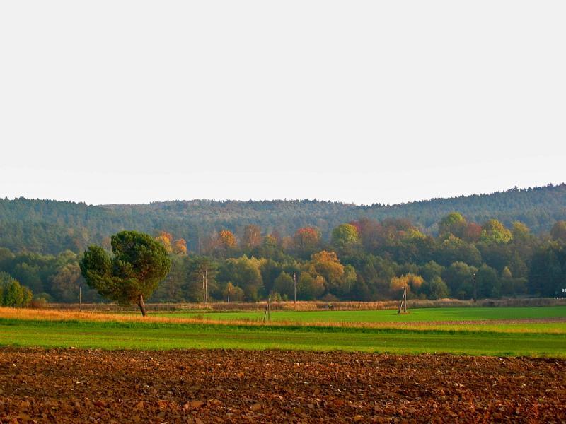 Autumn Near Werchrata