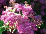Purple Cloudlet