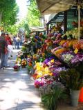 Flowers on La Rambla