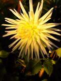Sunshine Star