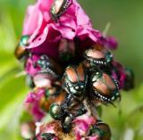 Beetles en masse