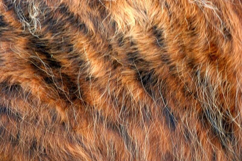 Who needs Tiger fur......