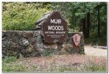 Muir Woods, Mill Valley, California