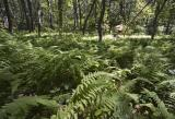 Trail of Tears : Fern Valley
