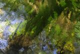 Reflections of Moss