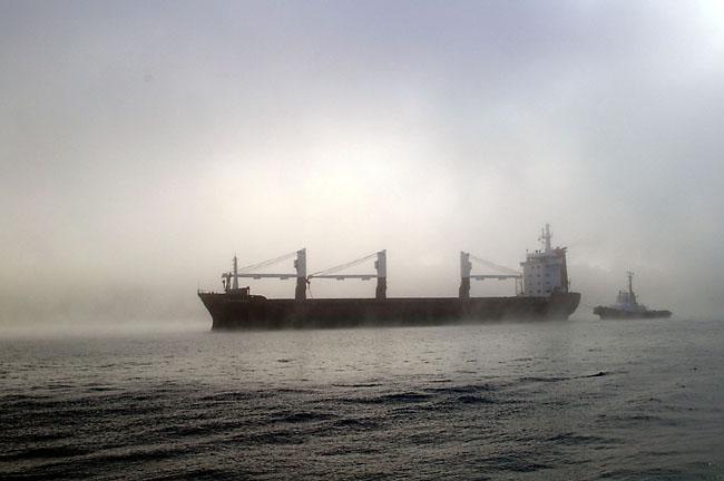 Sydney Fog 7