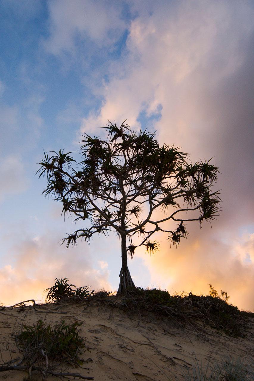 pandanus sunset clouds Hinchinbrook Island 12 by 18 _DSC2813