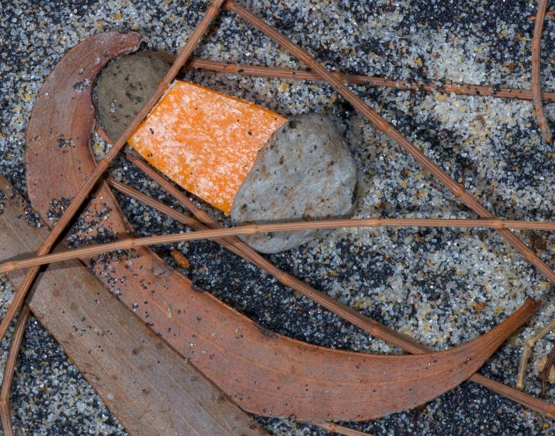 hinchinbrook  island leaves and needles<p>_DSC2488