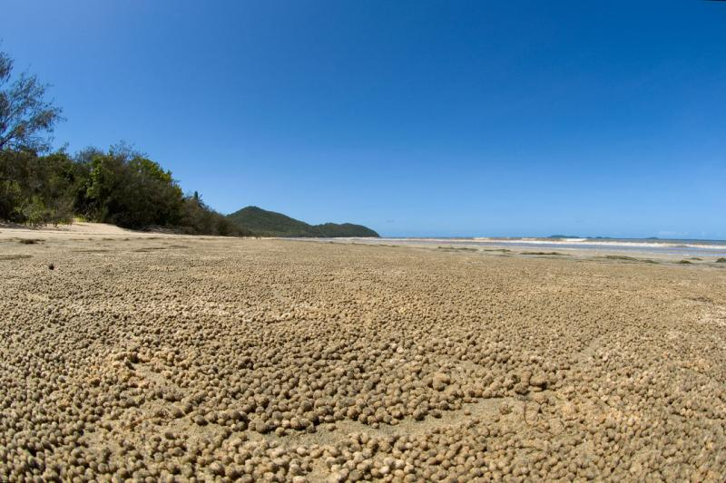 Beach with crab balls Hinchinbrook Island 12 by 18 _DSC6513
