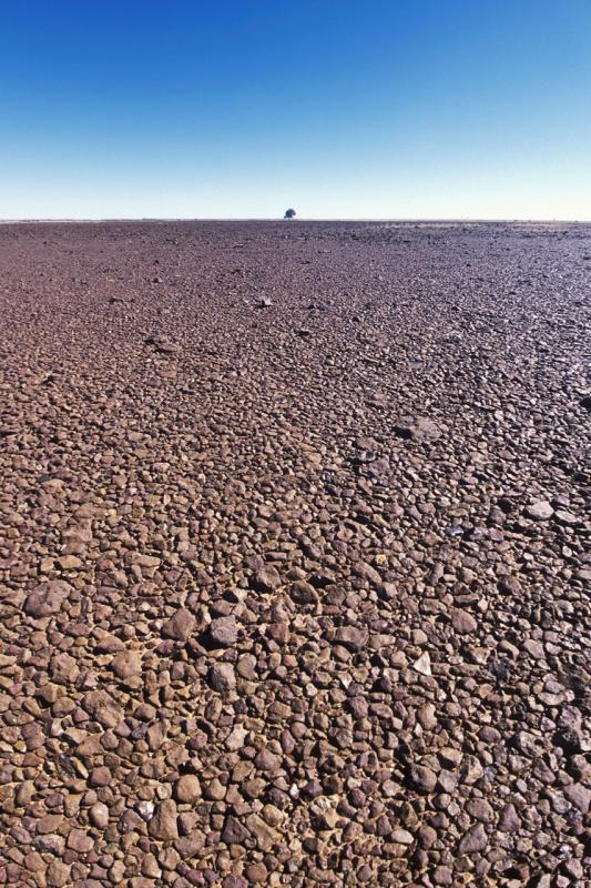 Gibber plain, Diamantina Gates National Park Queensland u002809