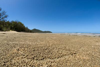 Beach with crab balls Hinchinbrook Island 12 by 18 _DSC6513