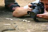 Jennifer Davis-- Dani & Yellow-faced Whip Snake CRW_3876_RT8