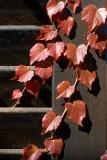 Leaves on shutter