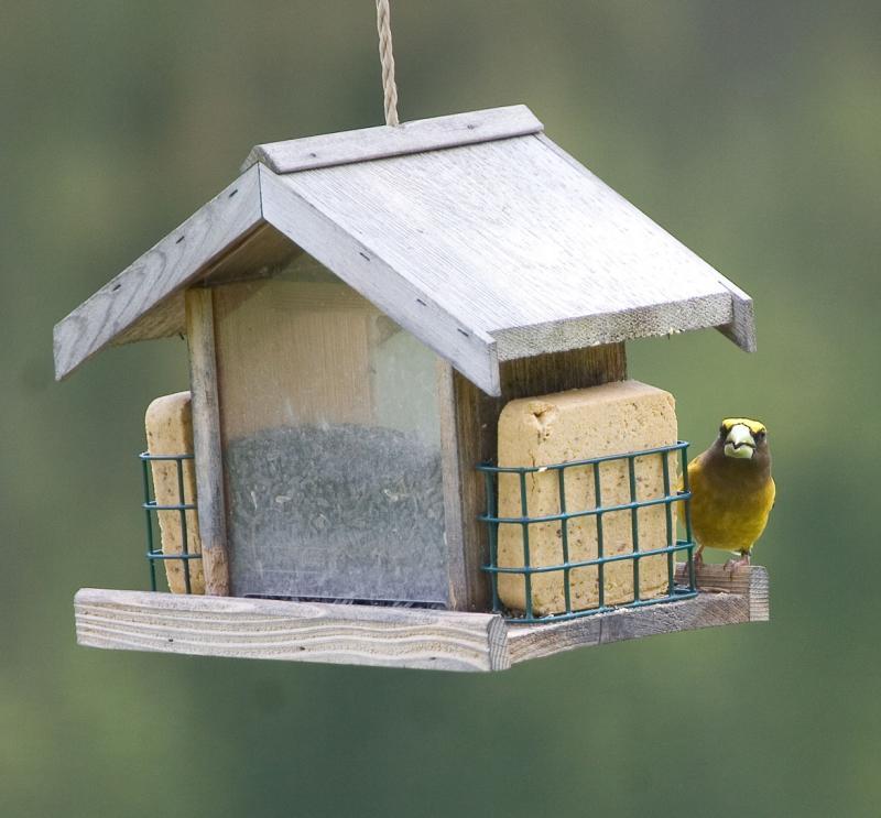 Big beak!