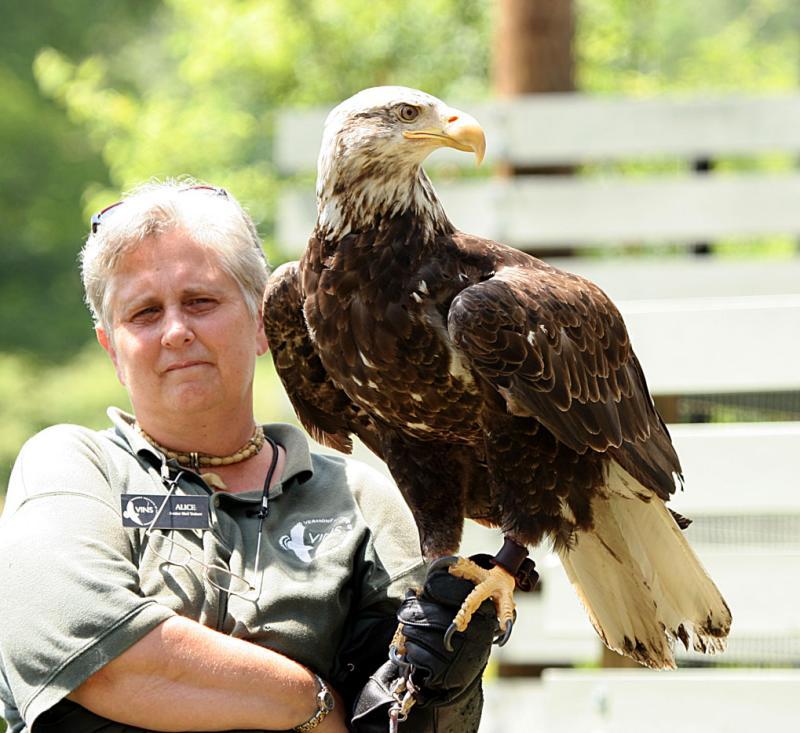 Alice & Adolescent Bald Eagle