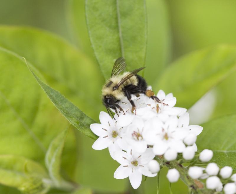 Bee delighting