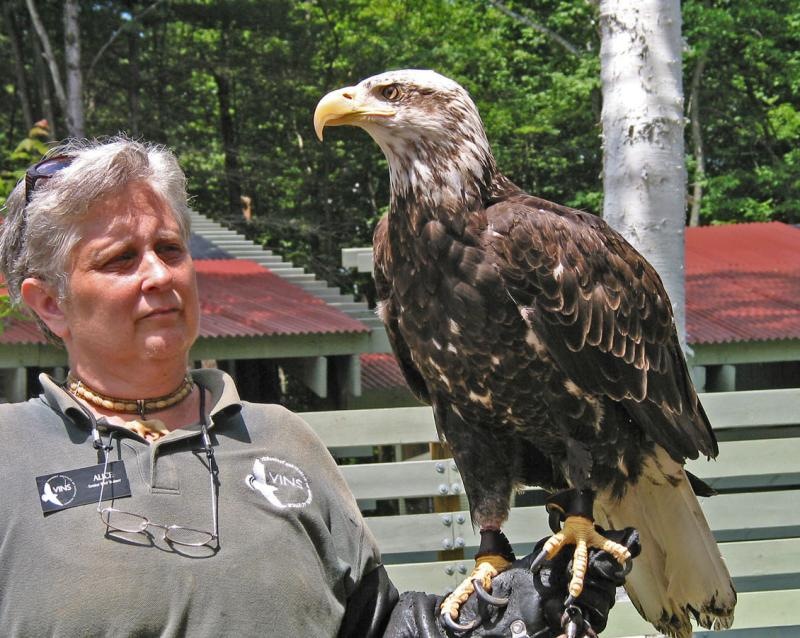 Imat. Bald Eagle