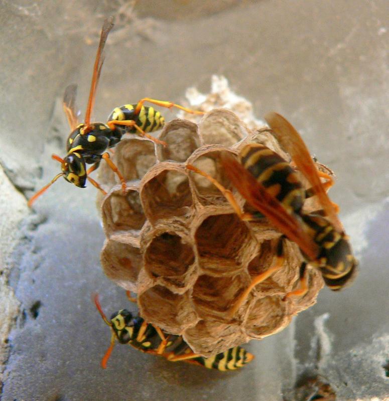 Hornets Nest?