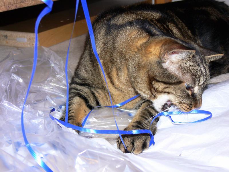Playing with a ribbon....