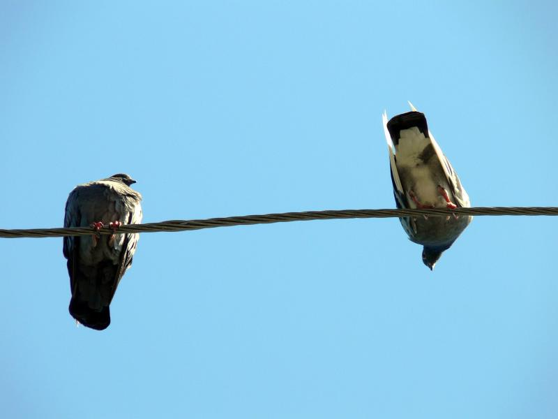 Birds on a wire,,,,