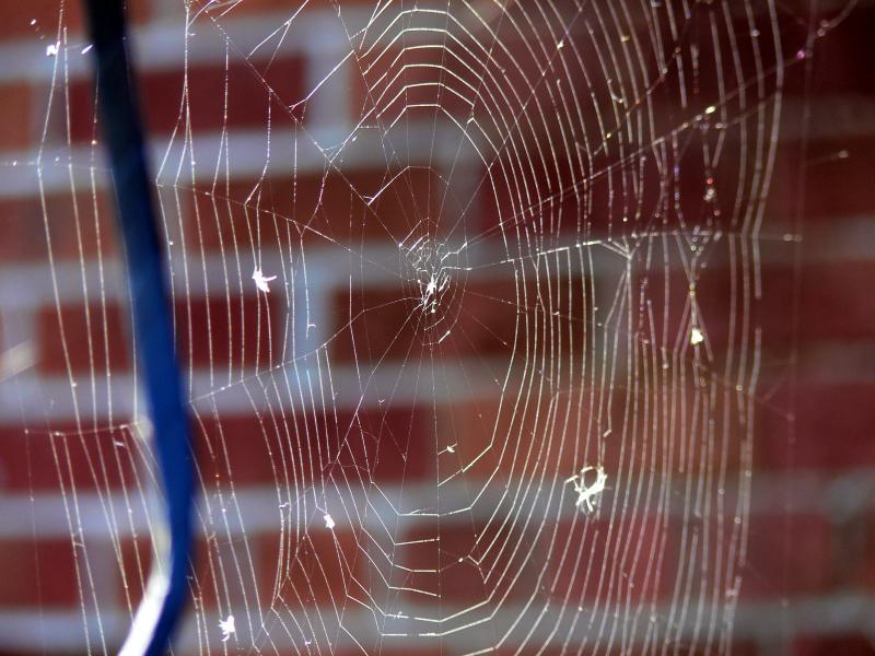 The web....