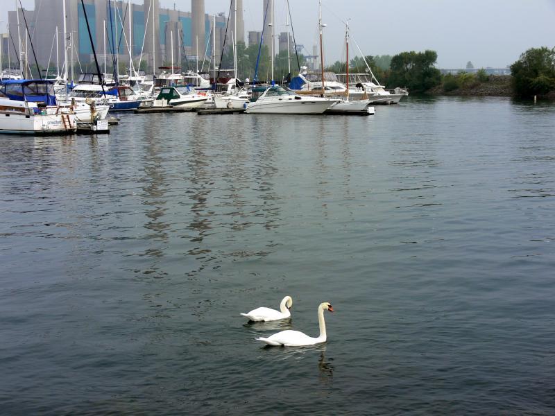 Grace & beauty.....at the Lakefront Promenade Marina.
