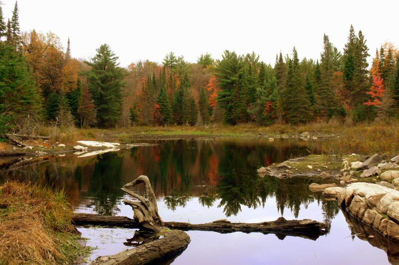 Mizzy Lake trail in Algonquin Park