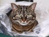 Squeaky the Cat - pad - June 12-2005 - 002.jpg
