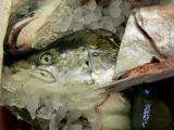 Fish heads....