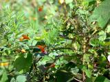 Flora at Binder & Twine Park