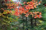 Fall Colours....