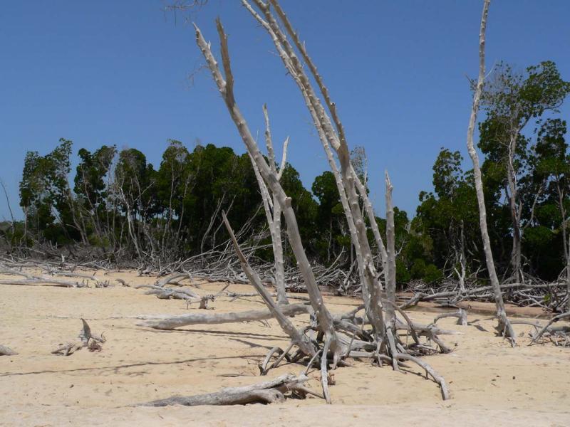 la mangrove à musha2.jpg