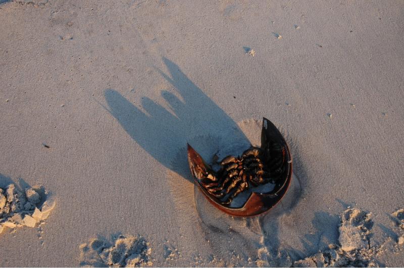 shell at sunset