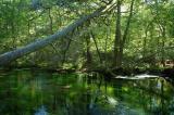 Connequot River